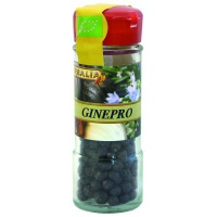 Ginepro in bacche